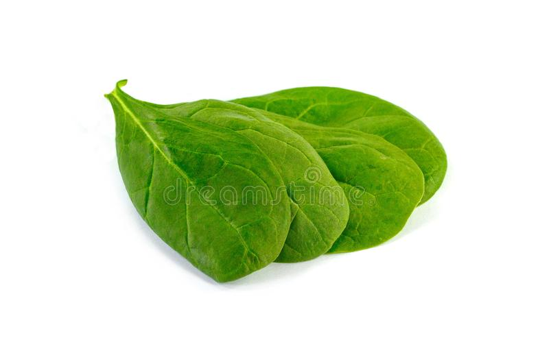 Fresh green spinach isolated on white background. stock photography