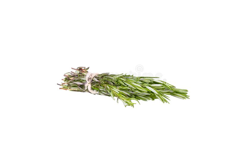 Fresh green sprig of rosemary isolated stock photos