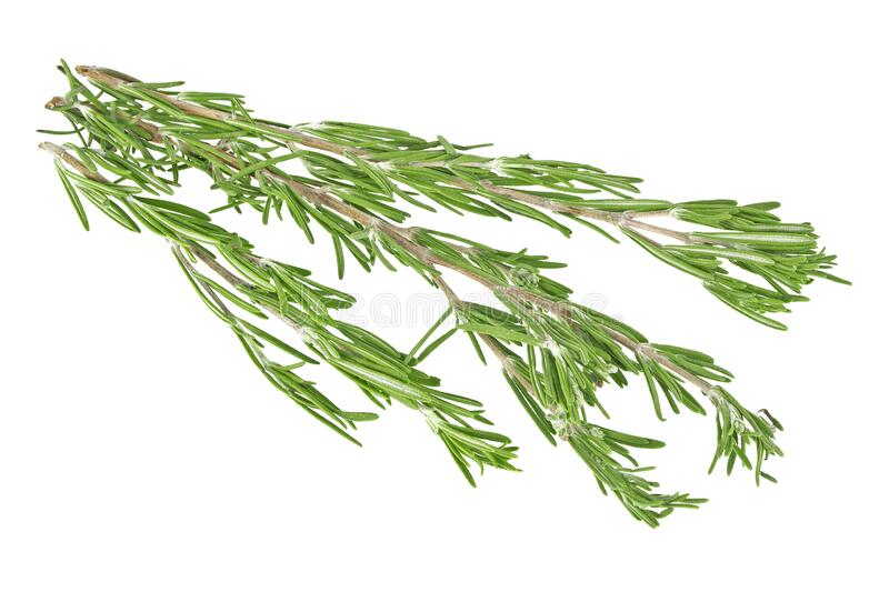 Fresh green sprig of rosemary isolated on white background. Fresh green sprig of rosemary isolated on a white background stock photos