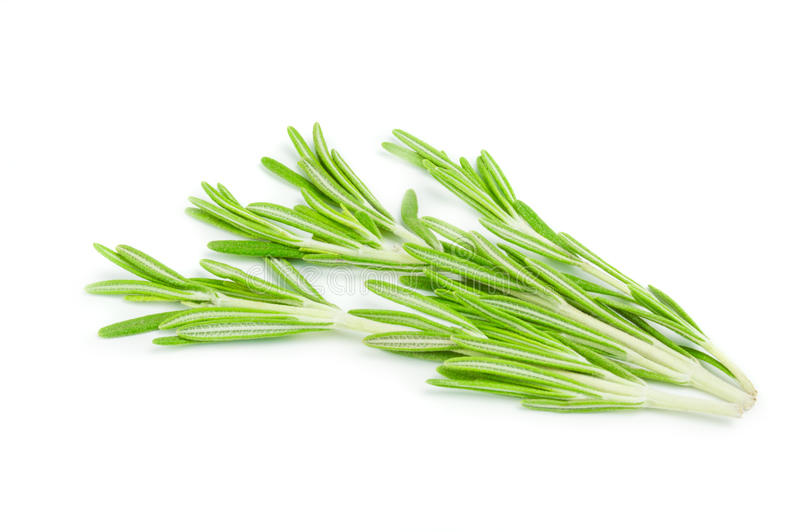 Fresh green sprig of rosemary isolated on a white background royalty free stock photos