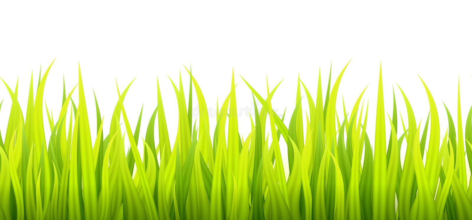Fresh and green spring grass growth. Springtime lawn lighted with a sunlight during the day time. Seamless herbal height banner vector illustration