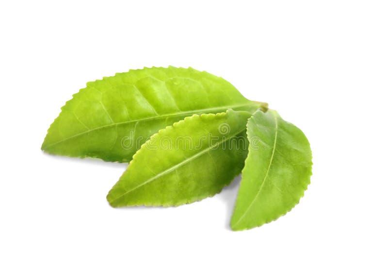 Fresh green tea leaves isolated. On white stock image