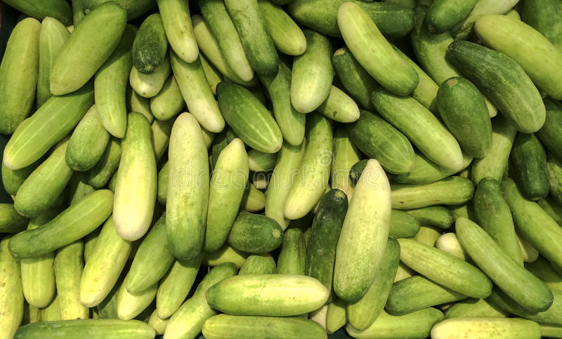 Fresh green Thai cucumber collection outdoor on market royalty free stock photography