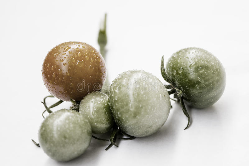 Fresh green tomatoes. Macro of red and green tomatoes with glistening dew on them stock photography