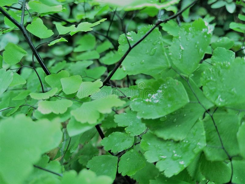 Fresh green tree nature concept royalty free stock image