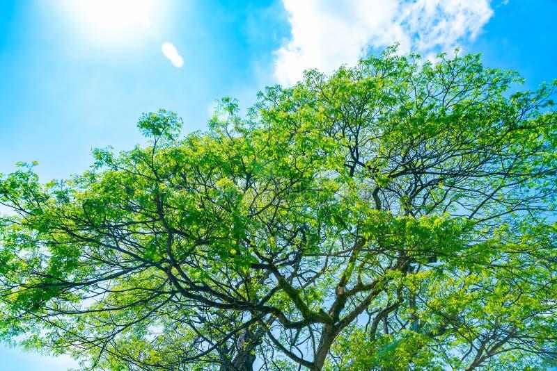 Fresh green tree over blue sky background stock photo