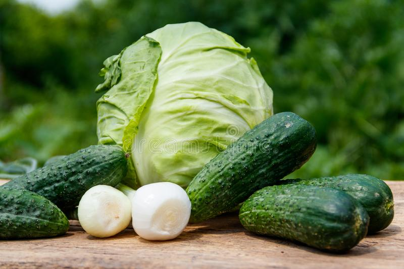 Fresh green vegetables on rustic wooden table outdoor. Cabbage, cucumbers and onion on wood table on blurred background stock photo