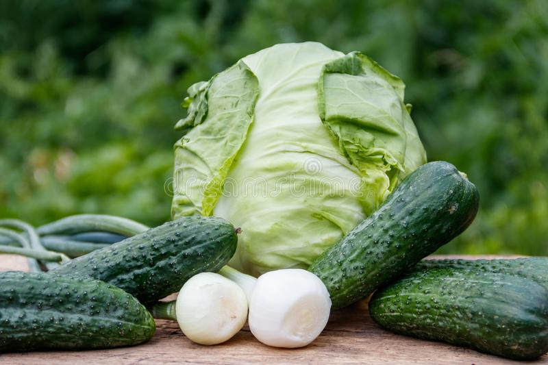 Fresh green vegetables on rustic wooden table outdoor. Cabbage, cucumbers and onion on wood table on blurred background royalty free stock photos