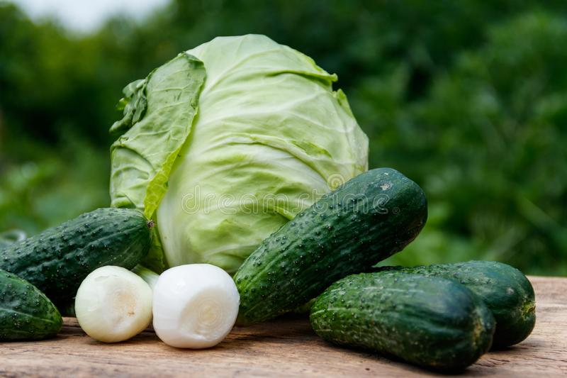 Fresh green vegetables on rustic wooden table outdoor. Cabbage, cucumbers and onion on wood table on blurred background royalty free stock photography