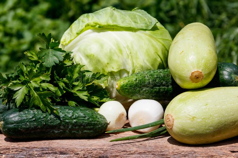 Fresh green vegetables on rustic wooden table outdoor. Cabbage, cucumbers, parsley and onion on wood table on blurred background stock image