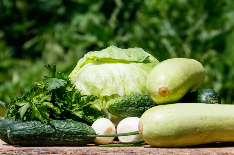 Fresh green vegetables on rustic wooden table outdoor. Cabbage, cucumbers, parsley and onion on wood table on blurred background royalty free stock image