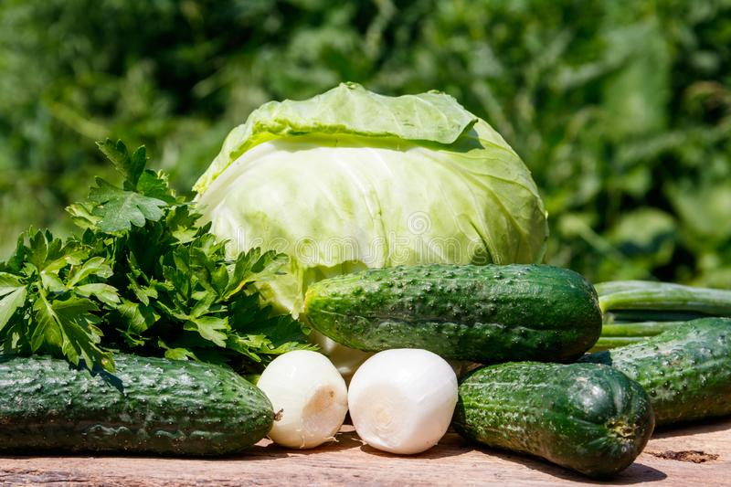 Fresh green vegetables on rustic wooden table outdoor. Cabbage, cucumbers, parsley and onion on wood table on blurred background royalty free stock photography