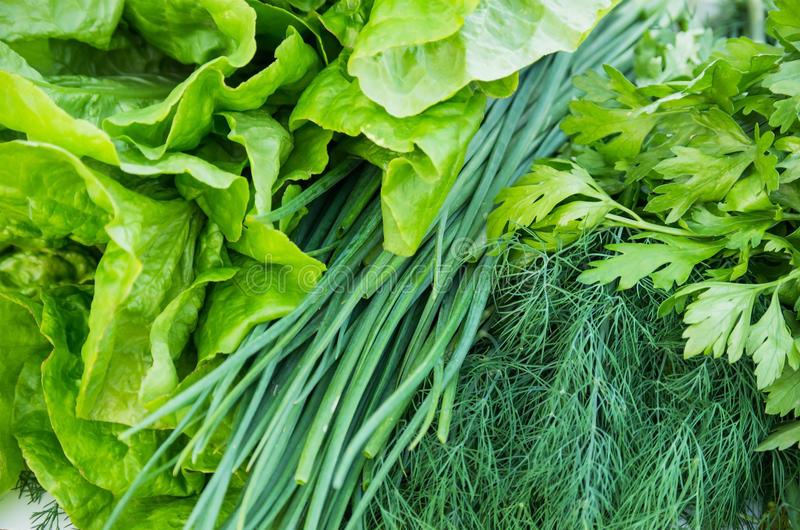 Download Fresh greens stock photo. Image of parsley, nutrient - 25708506