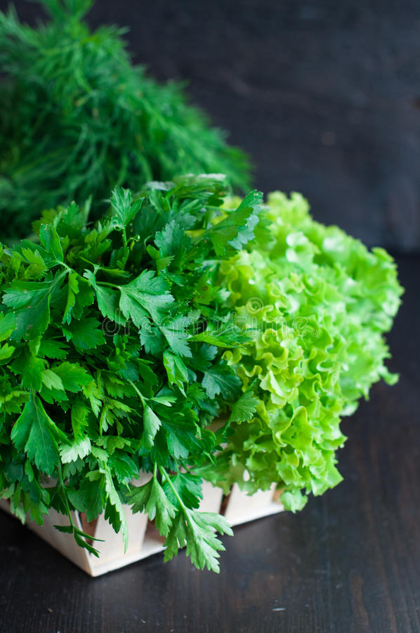 Fresh Greens with Lettuce, Mint, Dill and Parsley, Spring onion stock image