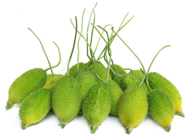 Fresh group of teasel gourds. Over white background royalty free stock photos