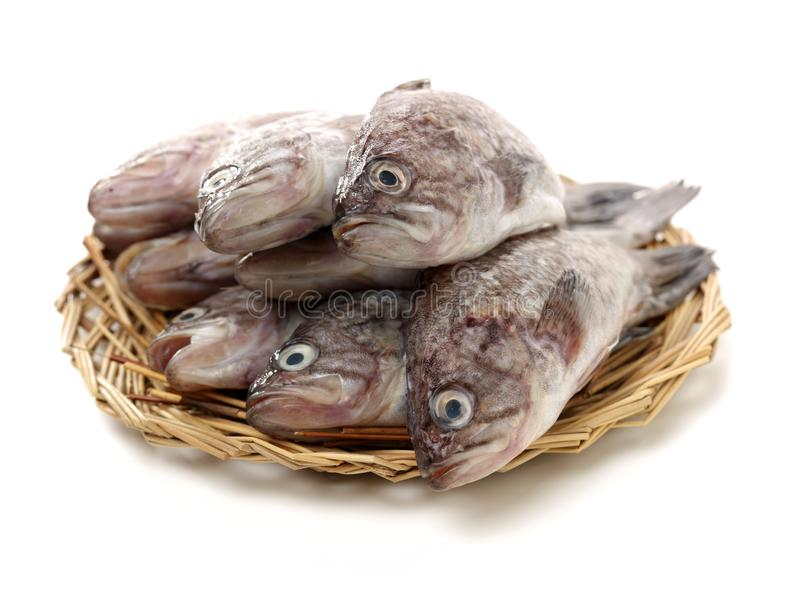 Fresh Grouper. On white background stock photos