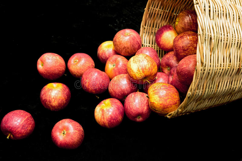 Fresh harvest of apples in basket royalty free stock photos