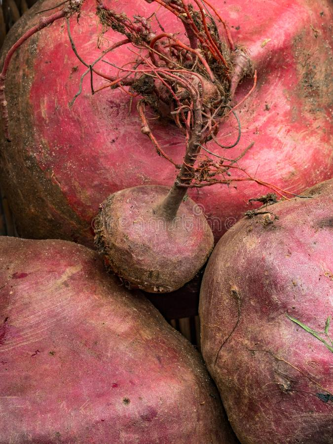Fresh harvest of beets, beet background, organic anti cancer food, rich in iron. Healthy food stock image