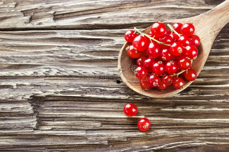 Fresh harvested redcurrant in wooden spoon on rustic wooden table background, selective focus, copy space. stock photography