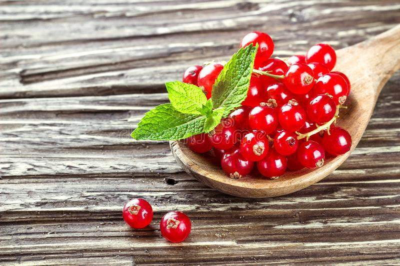 Fresh harvested redcurrant in wooden spoon on rustic wooden table background, selective focus, copy space. royalty free stock image