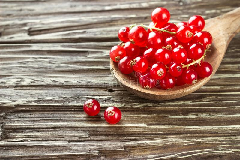 Fresh harvested redcurrant in wooden spoon on rustic wooden table background, selective focus, copy space. royalty free stock photography