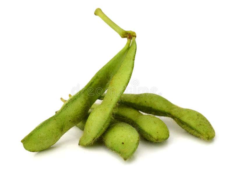 Fresh harvested soybean edamame plant isolated stock image