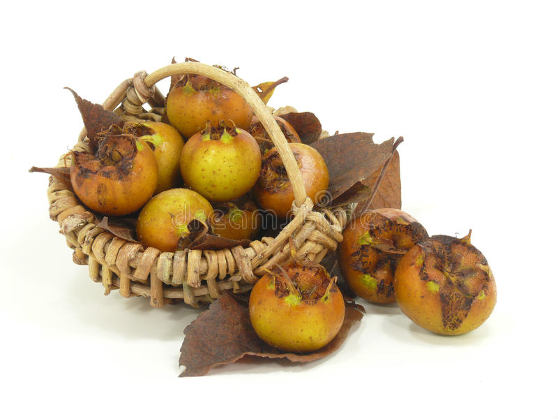 Fresh havest bio Medlar stock photography