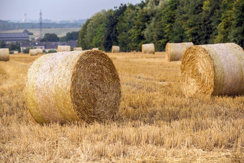Fresh hay bales royalty free stock photos