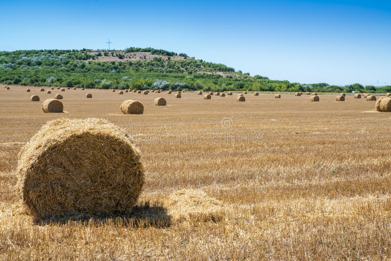 Fresh hay bales on field during summertime stock photo
