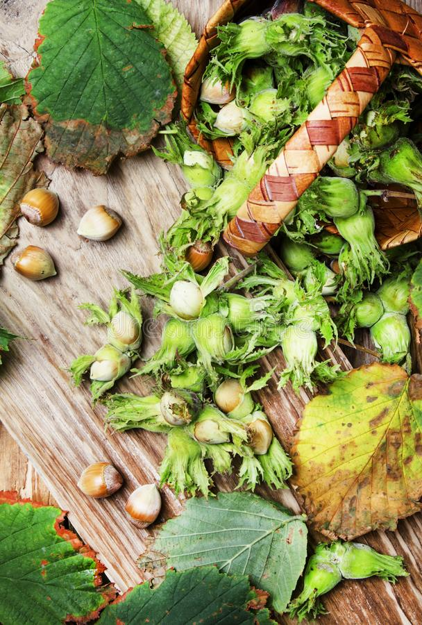 Fresh hazelnuts in shell with leaves in wicker basket, vintage w royalty free stock images