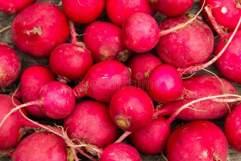 Fresh healthy red raddish closeup royalty free stock photography