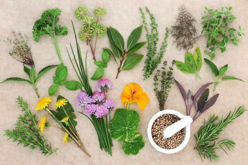 Fresh Herb Selection. Large fresh herb selection with coriander seed in a mortar with pestle on hemp paper background. High in antioxidants and vitamins. Top stock image