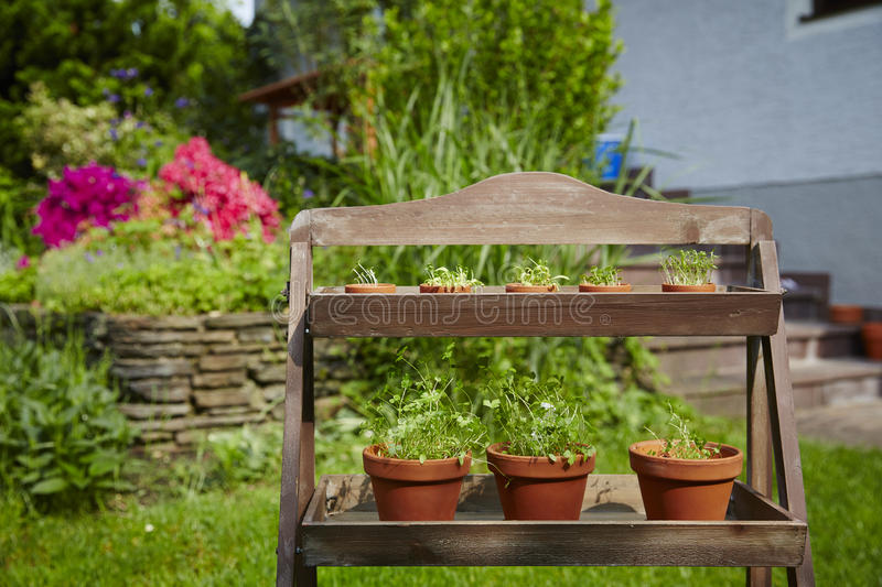 Fresh herbage in pots stock images