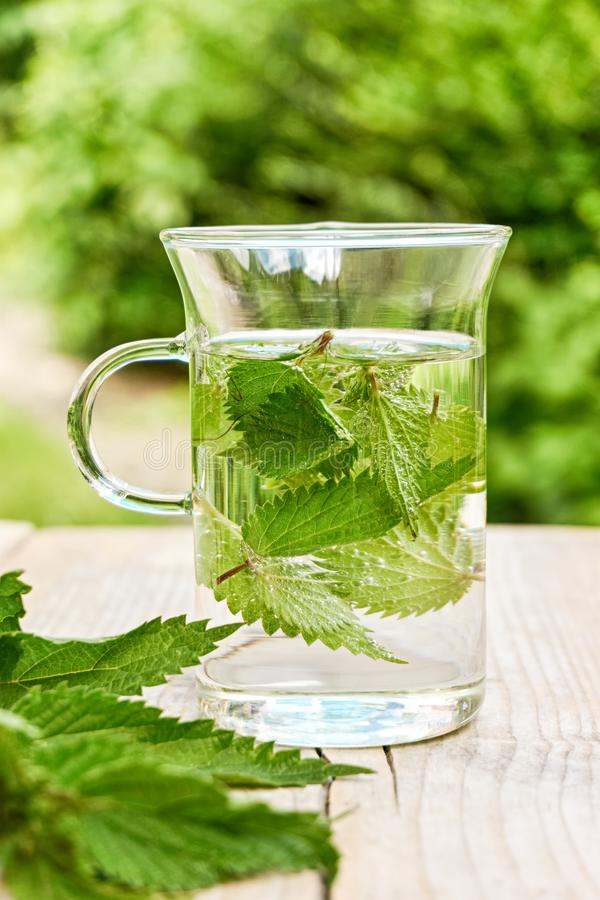Fresh herbal nettle tea with fresh leaves. Fresh herbal nettle tea. Green nettle leaves in a glass in a garden on a wooden table with fresh leaves in foreground royalty free stock image