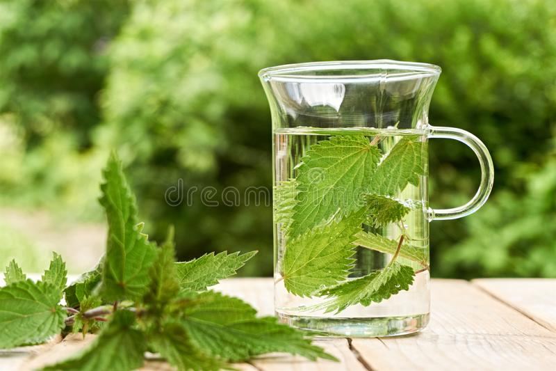 Fresh herbal nettle tea with fresh leaves. Fresh herbal nettle tea. Green nettle leaves in a glass in a garden on a wooden table with fresh leaves in foreground stock photography