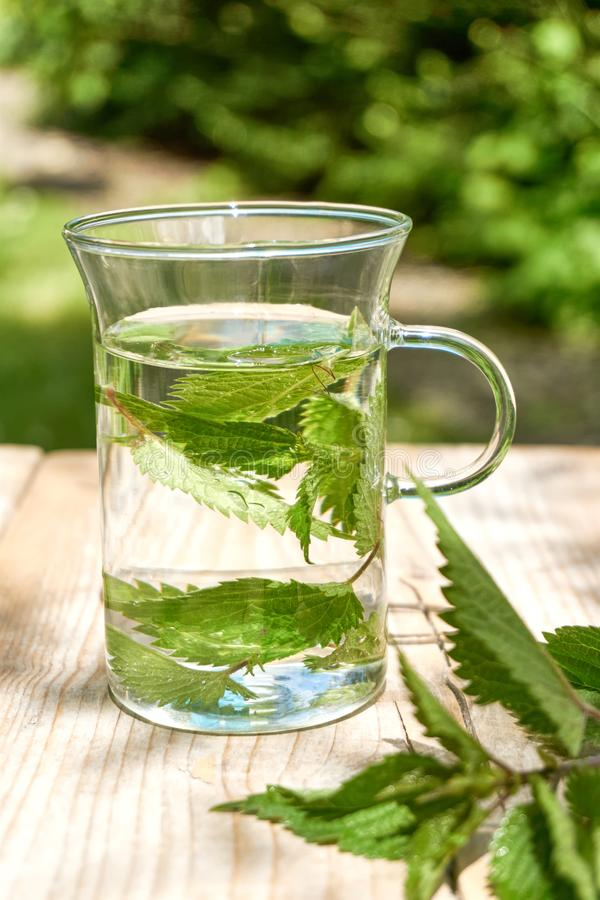 Fresh herbal nettle tea with fresh leaves. Fresh herbal nettle tea. Green nettle leaves in a glass in a garden on a wooden table with fresh leaves in foreground stock images