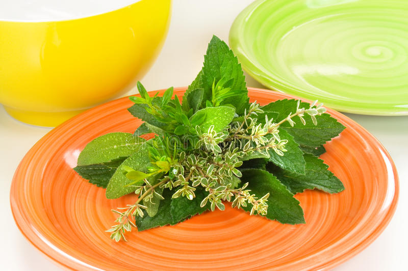 Download Fresh Herbs stock image. Image of flavour, bunch, graft - 19674849