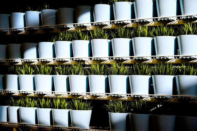 Fresh herbs in ceramic pots. Different types of spice plants in ceramic pots.  stock image