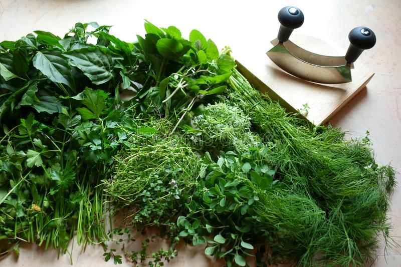 Fresh herbs and chopping utensils stock photography
