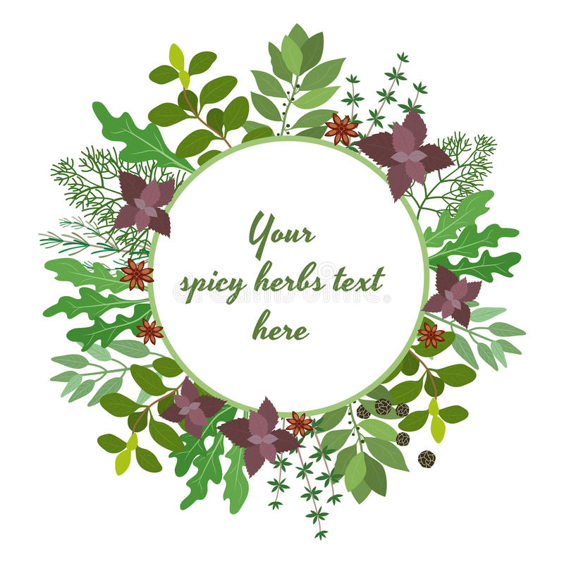 Fresh herbs circular frame. Vector illustration of fresh cooking herbs in a circular frame with oregano parsley basil rosemary rocket sage bay and thyme leaves vector illustration