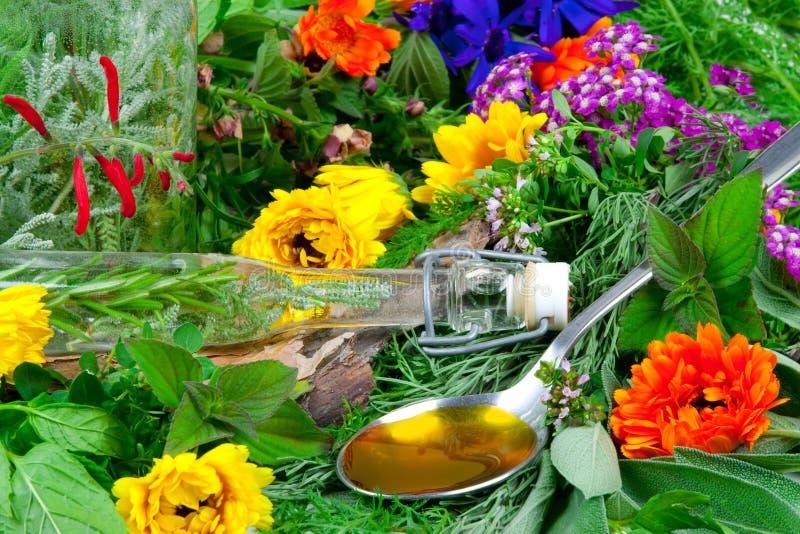 Fresh herbs for herbal medicine stock photo