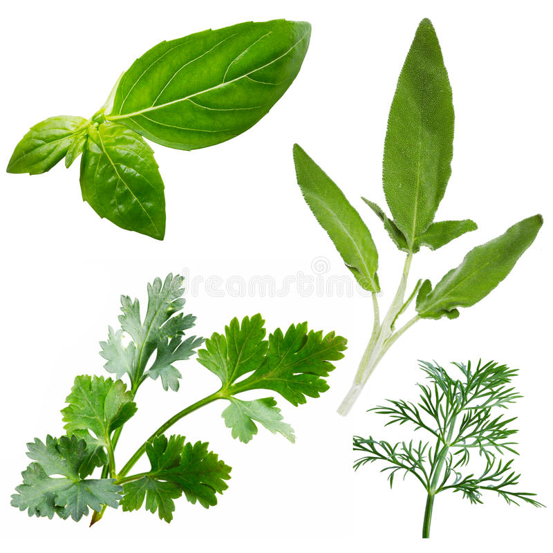 Download Fresh Herbs Isolated On White Background Stock Photo - Image: 23615916