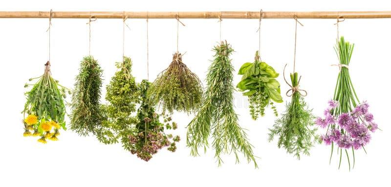 Herbs dill basil rosemary thyme chive oregano marjoram dandelion stock photo