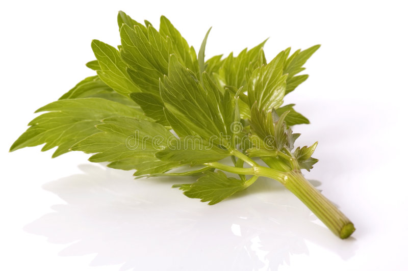 Fresh herbs. lovage royalty free stock photo