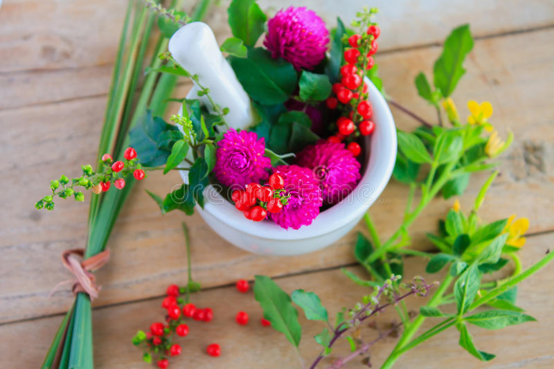 Fresh herbs in the mortar. Alternative medicine stock images