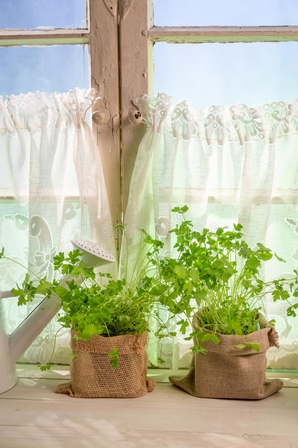 Fresh herbs near white window stock images