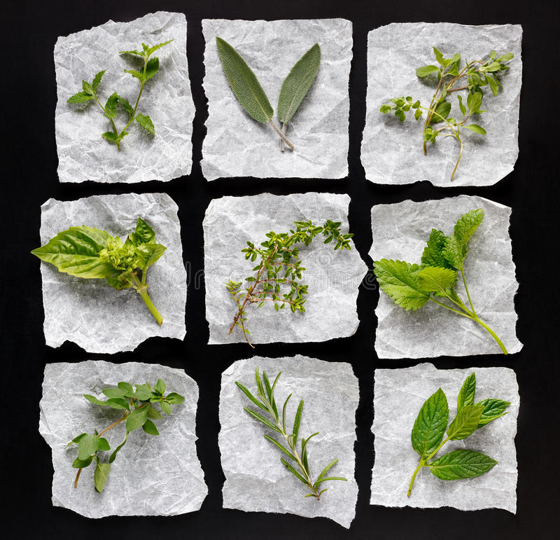 Fresh herbs from organic cultivation royalty free stock photography