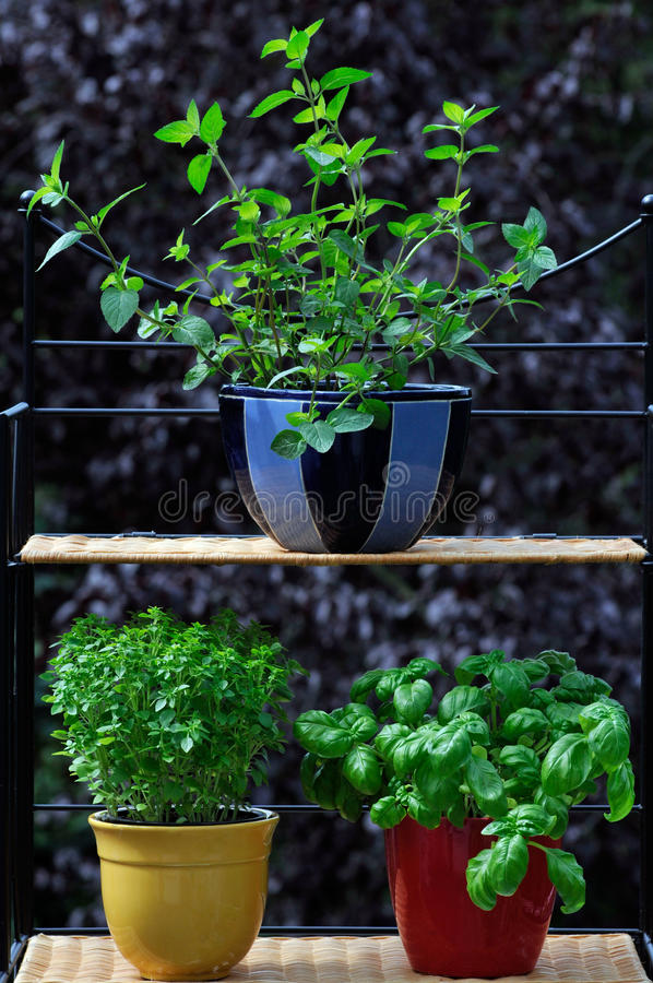 Download Fresh herbs in pots stock image. Image of aroma, mint - 20726385