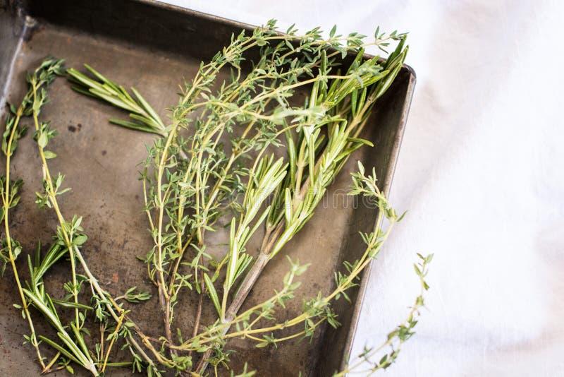 Fresh Herbs – Rosemary and Thyme stock photos