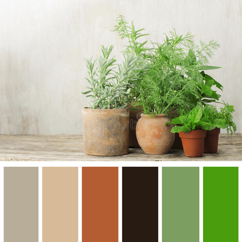 Fresh herbs in terra cotta pots. Color palette stock image